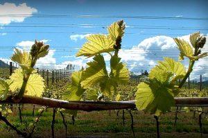 Eichardts-blog-winemaker-dinner