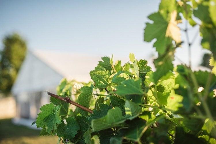 Eichardts-blog-winemaker-dinner-alpha-domus