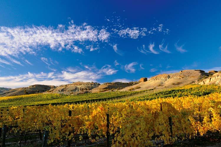 Eichardts-blog-winemaker-dinner-mt-difficulty